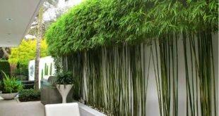 Bambuspflanzen - Google-Suche