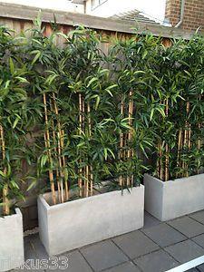 Frische Privatsphäre Pflanzen in Töpfen Die besten 25 Ideen auf Pinterest Zaun