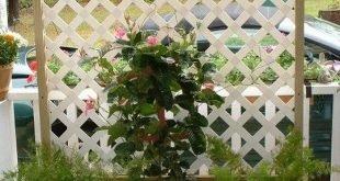 Trellis Planter Box DIY Einfache Videoanweisungen