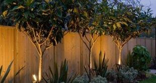 Uplit Bäume - Interesse am Zaun im äußersten Gartensegment?