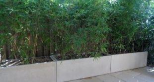 Als ich Ende 2011 einen Pflanzenschutz zwischen unserem Terrassenbereich und unserem ne ...
