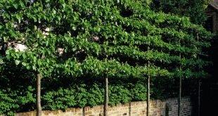 Bildschirmform Nachbarn! Luciano Giubbilei - Kensington Gardens