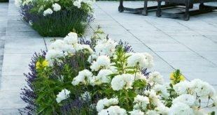Screen Protector Planter - Zuschauer können auch dekorativ sein!