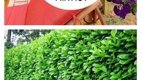 10 Pflanzen perfekt für die Privatsphäre im Freien