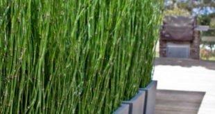 Bambus als Privatsphäre im Garten oder auf dem Balkon