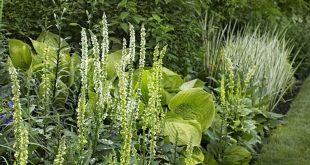 9 Möglichkeiten, Pflanzen zu verwenden, um Privatsphäre in Ihrem Garten zu schaffen