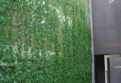Balkon Garden Dreaming: So erstellen Sie einen Vertikalen Garten sowie eine Galerie mit ...