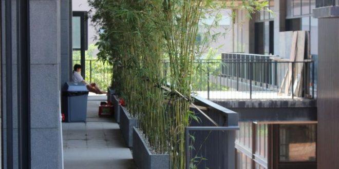 Bambus Als Balkon Sichtschutz Krauter Idee Modernes Design Efeu