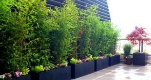 Bambuspflanzen schwarze Wannen Reihe Terrasse Balkon