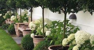 Ok, Jesse, dieser ist einfach perfekt. Topiary und Box für Wintergarten und ...