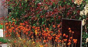 5 Schritte zu einem schönen Vorgarten