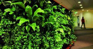 Angepasste grüne Wände für frische Innenräume von Greenworks