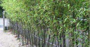 Bambusgarten Ideen Backyards_43