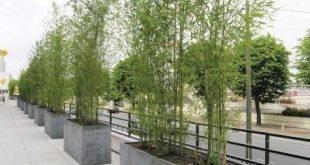 Hast du? Bambus