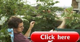 Hohe Pflanzen für einen privaten Balkon