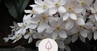 Immergrüne Kletterpflanzen - # Immergrüne #jardin #Schneidpflanzen