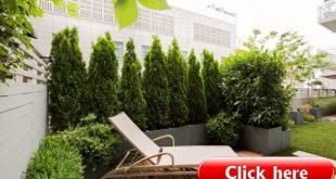 Immergrüne Pflanzen Lebedige Privatsphäre für die Terrasse