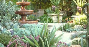 Jeanne Meadows Garten - Lässt mich an einige unserer California-Missionen denken ...