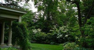 Mischung aus Bäumen und Evergreens hinter Viburnums und Hostas, um Privatsphäre zu schaffen - gorg ...