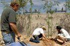 Wie man einen Bambusschirm pflanzt