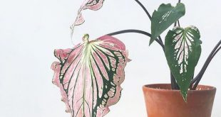 16+ betäubende Pflanzen im Freien Bilder Ideen