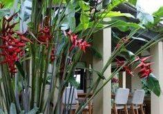 Aufgrund des relativ schmalen Sockels dieser Pflanze kann sie leicht an ei ...