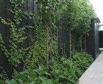 Ben Scott Garden Design Melbourne - Portfolio, Obstgarten St. Brighton