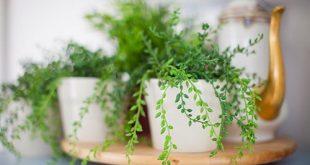 Bild oben: Ich kann Pflanzen nicht am Leben erhalten, also habe ich alles von Ikea gekauft. Sie sind...