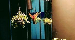 Bildschirm mit Grüns: Erstellen Sie einen Raumteiler für Zimmerpflanzen