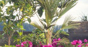 Green Screens: Schnell wachsende Sichtschutzpflanzen für Ihre Terrasse