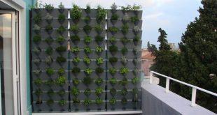 Haben Sie einen Balkon oder eine Terrasse und brauchen Sie Privatsphäre? Mach dir keine Sorgen - es wird auf deiner Seite wachsen ...