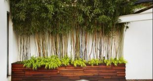 20 Bambus In Töpfen, die Sie im oder außerhalb des Hauses dekorieren können