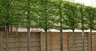 35 intelligente und stilvolle Garten-Screening-Ideen für die ...