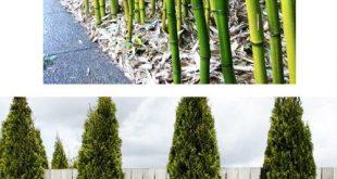 5 Landschaftsbauideen zur Erhöhung der Privatsphäre im Garten #DIY #Landscaping blog.compact ...