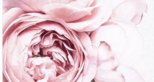6.9AUD - Erröten rosa und weiße Pfingstrose / Dekor Wand Tuch hochwertige Leinwand drucken ...