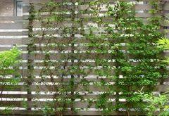 Außenpflanze Sichtschutz für Privatsphäre - moderne Terrasse von Lynn Gaffney Architect, PLLC