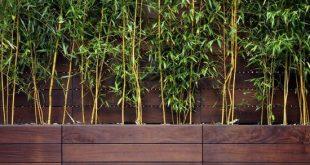 Bambuspflanzen Kuschelholz Privatsphäre Terrasse Balkon Gartenz ist da