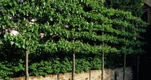 Bildschirm Form Nachbarn! Luciano Giubbilei - Kensington Gardens