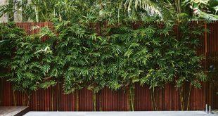 Dieser kompakte Garten in Sydney ist von Bali inspiriert