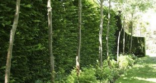 Ich liebe den Look dieser Hecken-Baum-Mischung für mehr Privatsphäre. Red Cow Farm garden ...