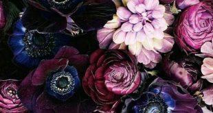 Lila Blumen-Hintergrund iPhone Schirm-Tapete