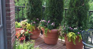 Summer Planters - könnte eine permanente Funktion auf unserem Deck sein, um die Privatsphäre zu schützen