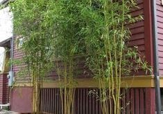 Über 70 brillante Ideen für den Sichtschutzzaun, die Ihrem Zuhause eine besondere Note verleihen