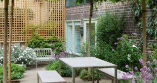 Weiße Maulbeeren mit Regenschirmtraining für Privatsphäre, Schatten und Obst. Könnte ein bisschen werden ...