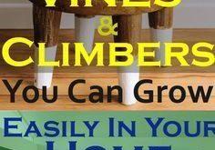 11 Beste Indoor-Reben und Kletterpflanzen, die Sie problemlos in Ihrem Zuhause anbauen können
