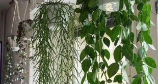 20+ Top Hängepflanzen Tipps