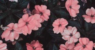 30+ Marvelous Flower Wallpaper für dein neues iPhone - Xtra Yummy Blog - #Blog ...