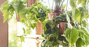 Abgeschlossener Sichtschutz für hängende Pflanzen.