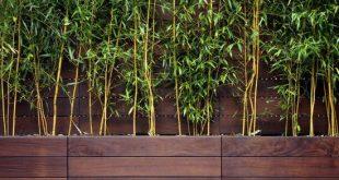 Bambuspflanzen Kuschelholz Privatsphäre Terrasse Balkon Gartenz ...