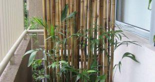 Bambusstangen bilden eine Leinwand - Tracey Lierz